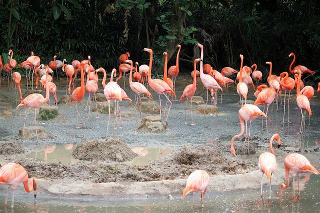 Jurong fuglepark