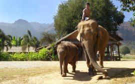 Jungletur på elefantryg i Thailand