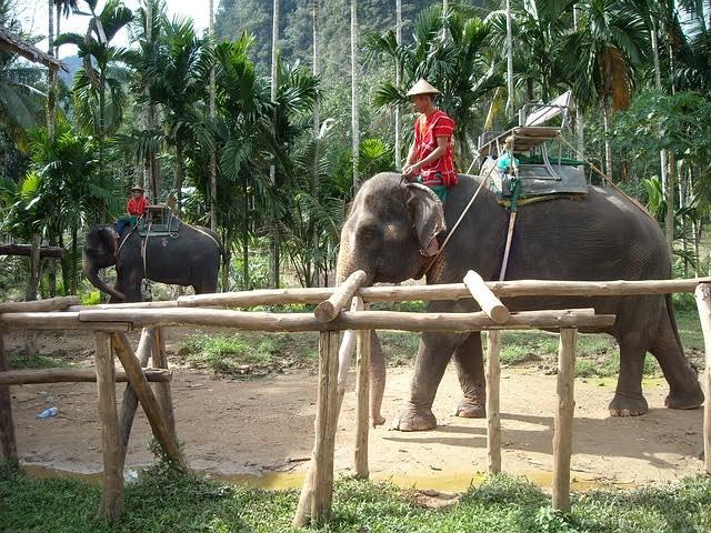 Elefantryg i Thailand