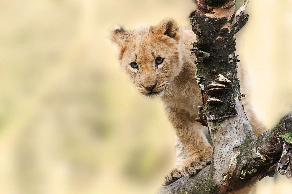 Verdens bedste safarilande