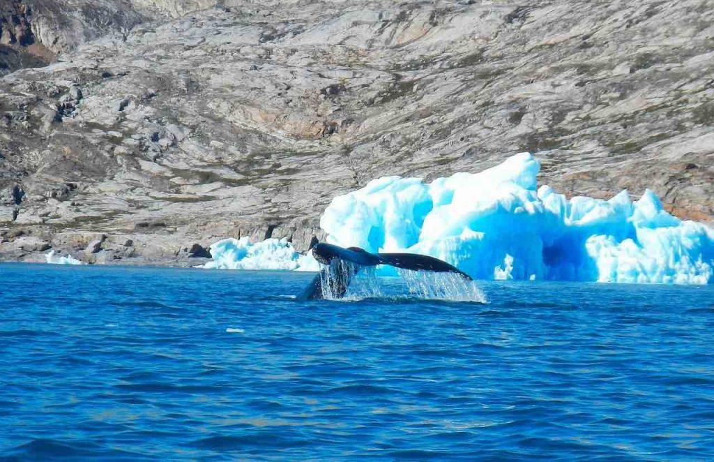 Oplevelser i Grønland