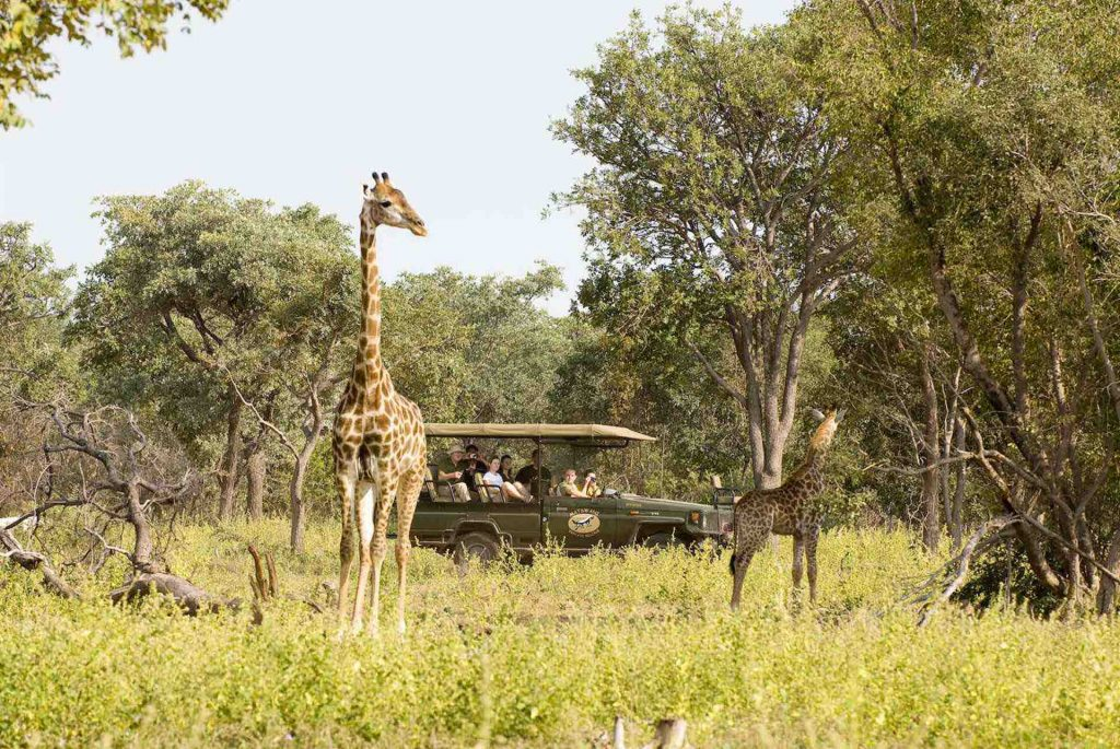 safari til Sydafrika