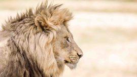 Luksus safari i Sydafrika