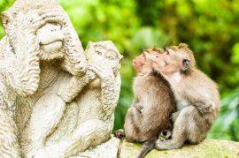 7 ting du ikke anede, du skulle opleve på Bali
