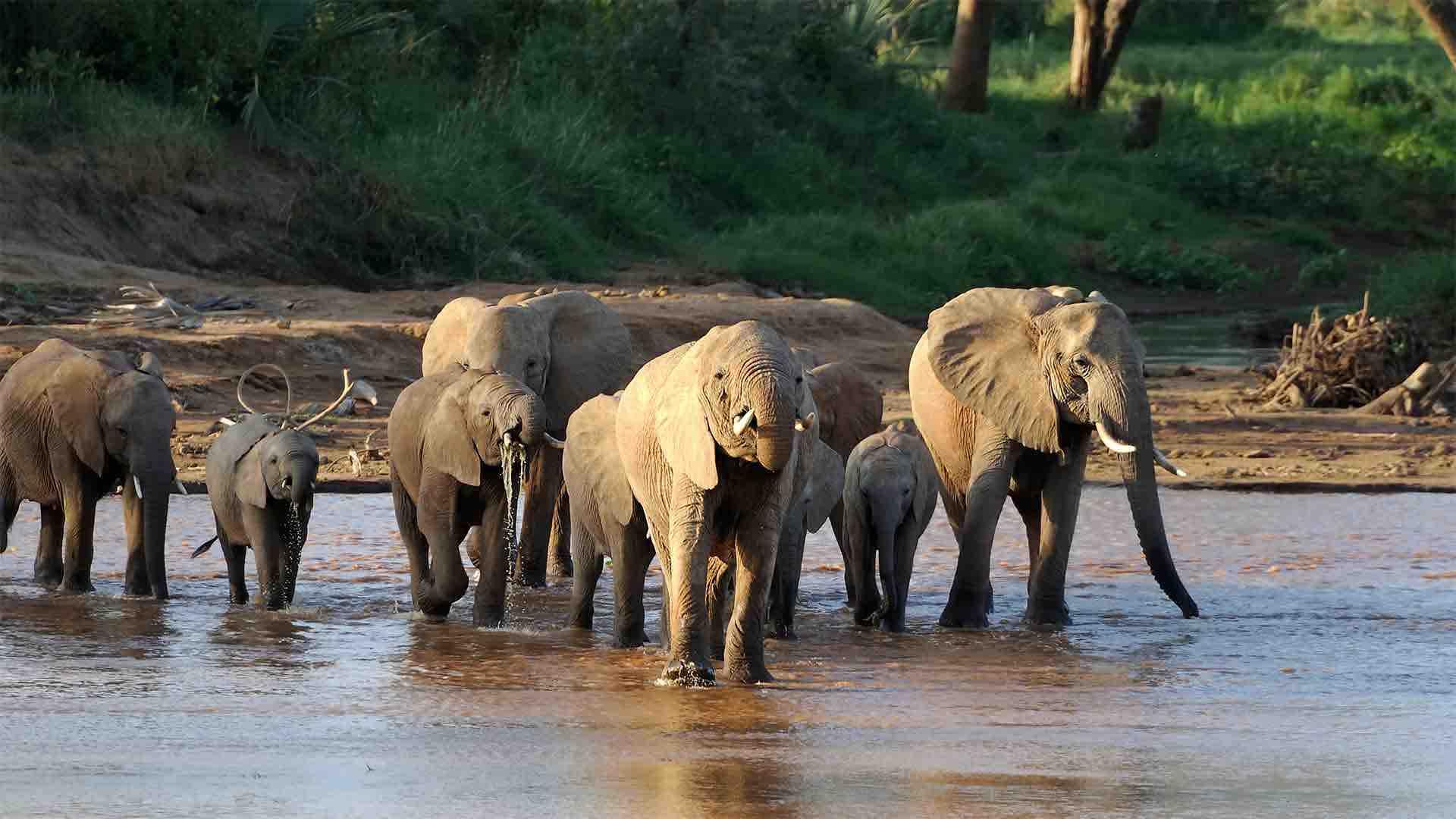 Afrikas bedste safarilande