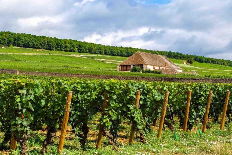 Vinrejse til Frankrig