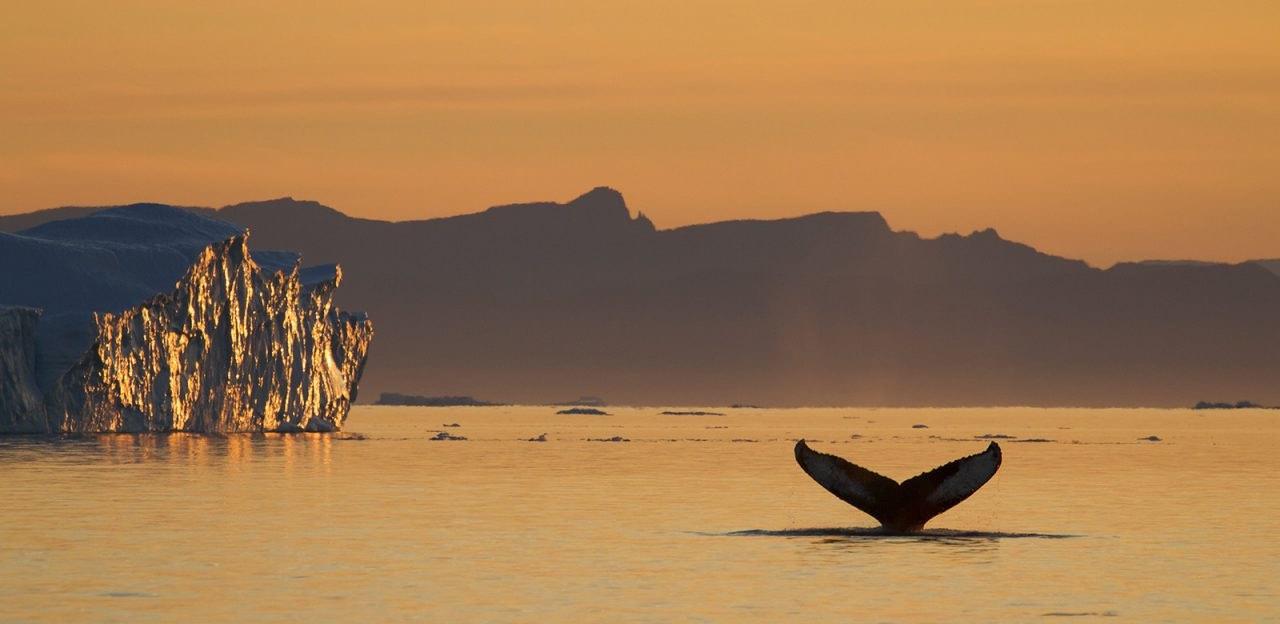 Drømmerejse til Grønland