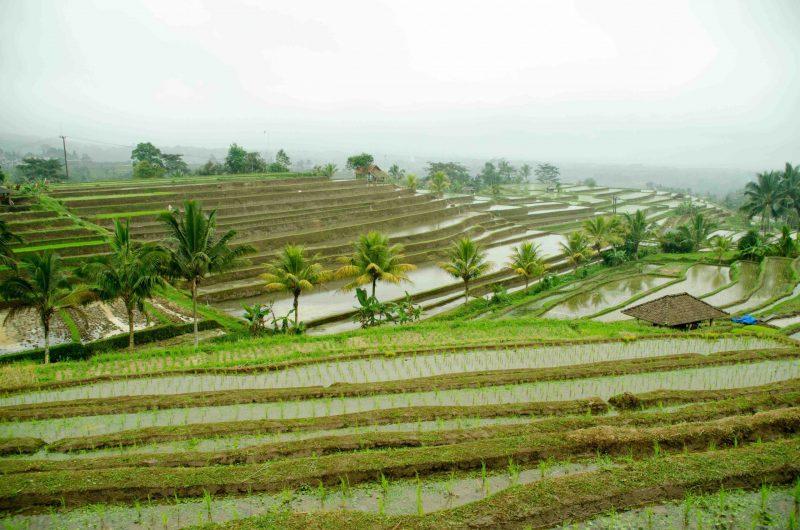Ubeskrivelige oplevelser på Bali