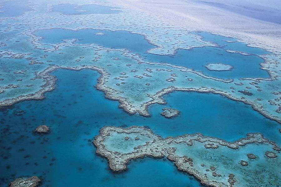 Great Barrier Reef – verdens største koralrev