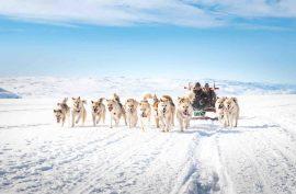 Hundeslæde – En 1000 år gammel tradition