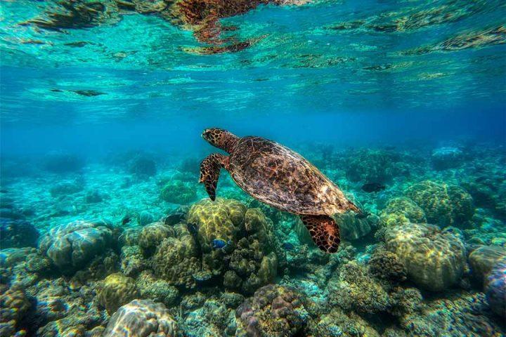 Verdens største koralrev
