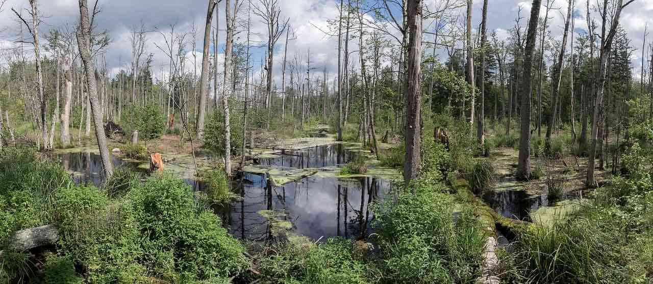 Oplagte destinationer for en uovertruffen vildmarksferie