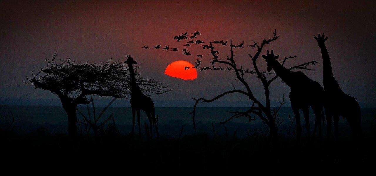 Natsafari