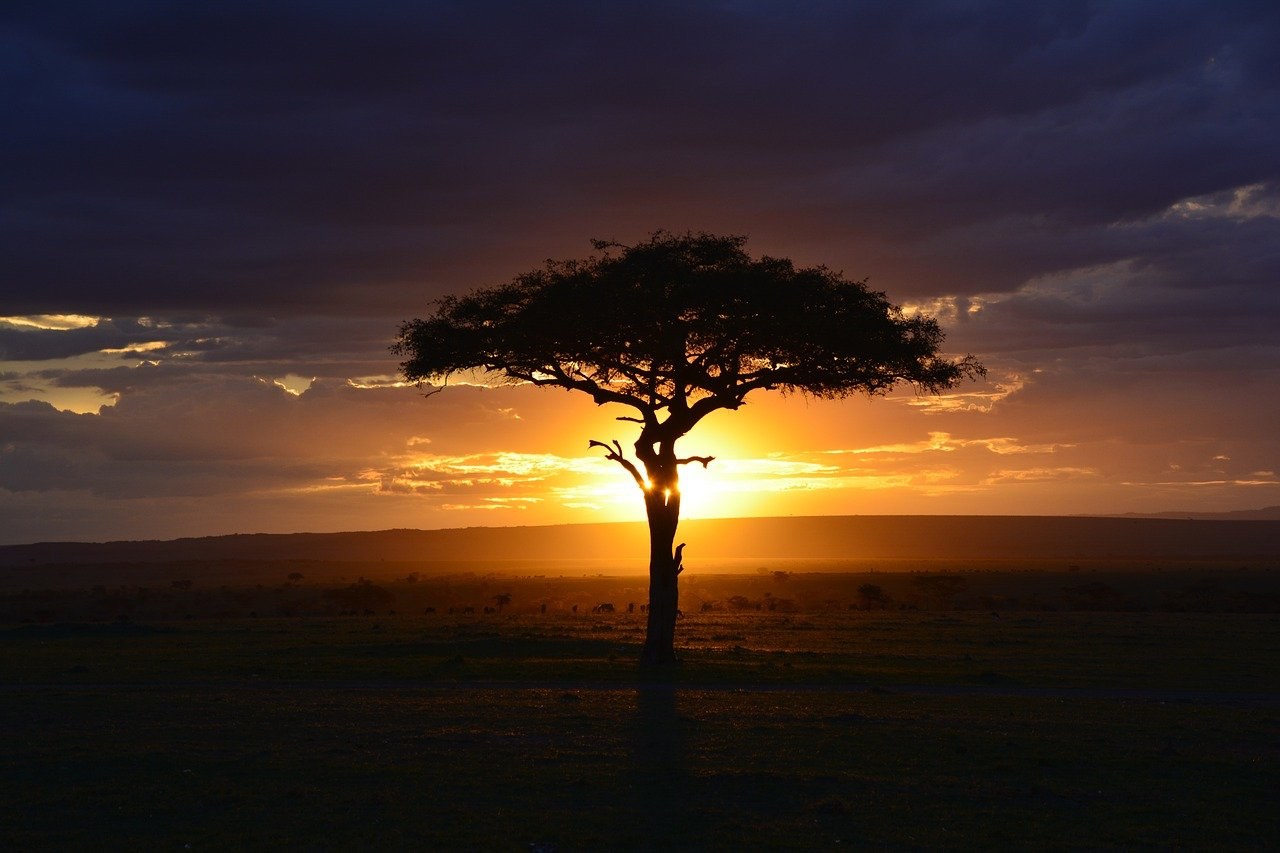 Natsafari – en helt unik oplevelse