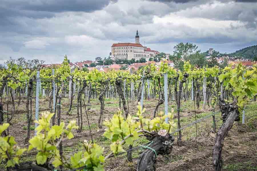 Vild med vin? Tag på vingårdsferie i Europa