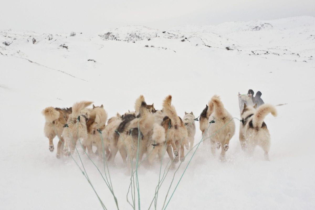 Oplev det bedste af Grønland
