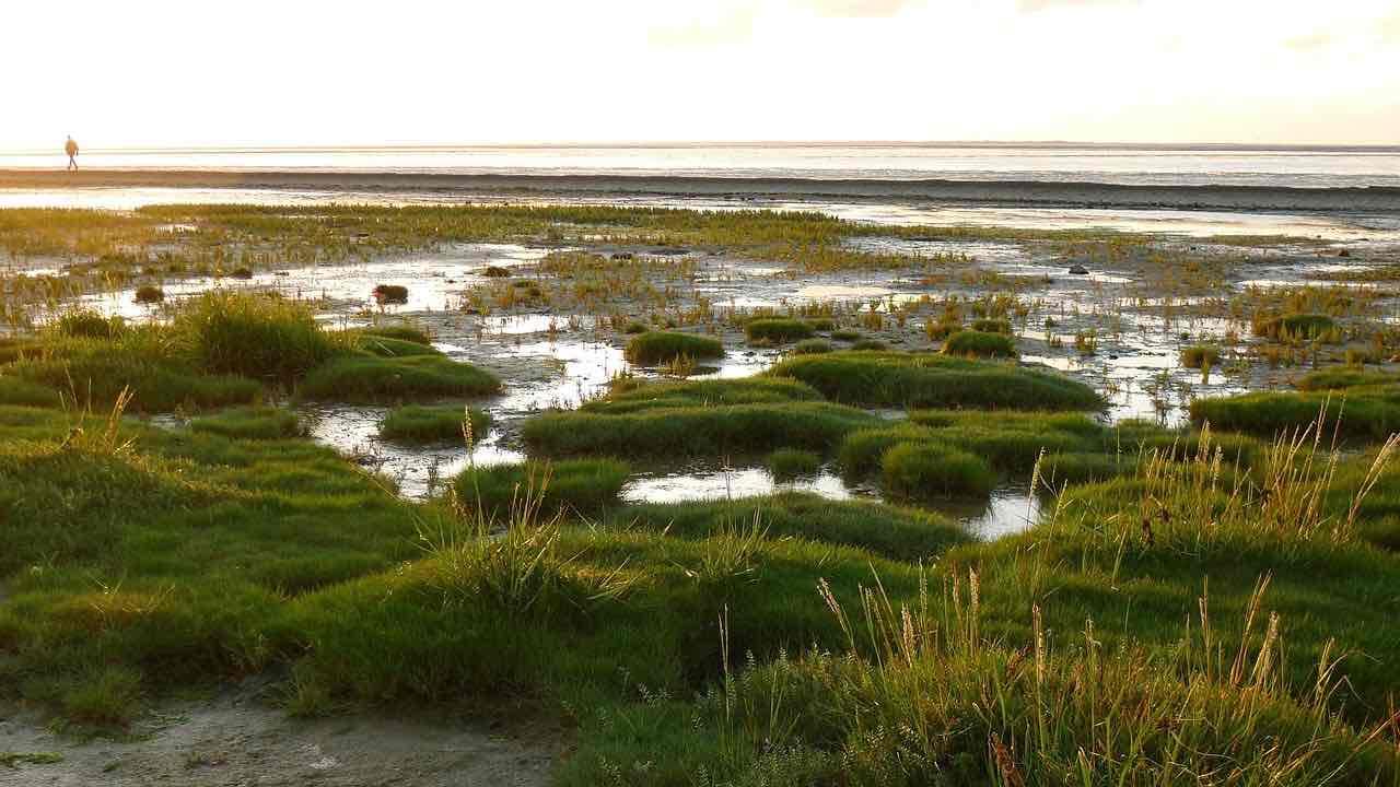 Nationalparken Vadehavet ved den danske Vestkyst
