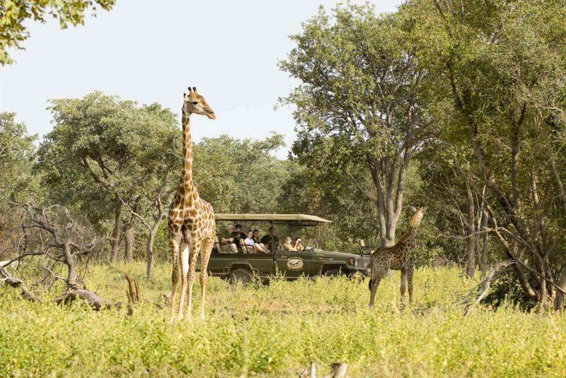 Drømmer du om en ferie for alle 3 generationer i familien? – Tag på safarirejse!