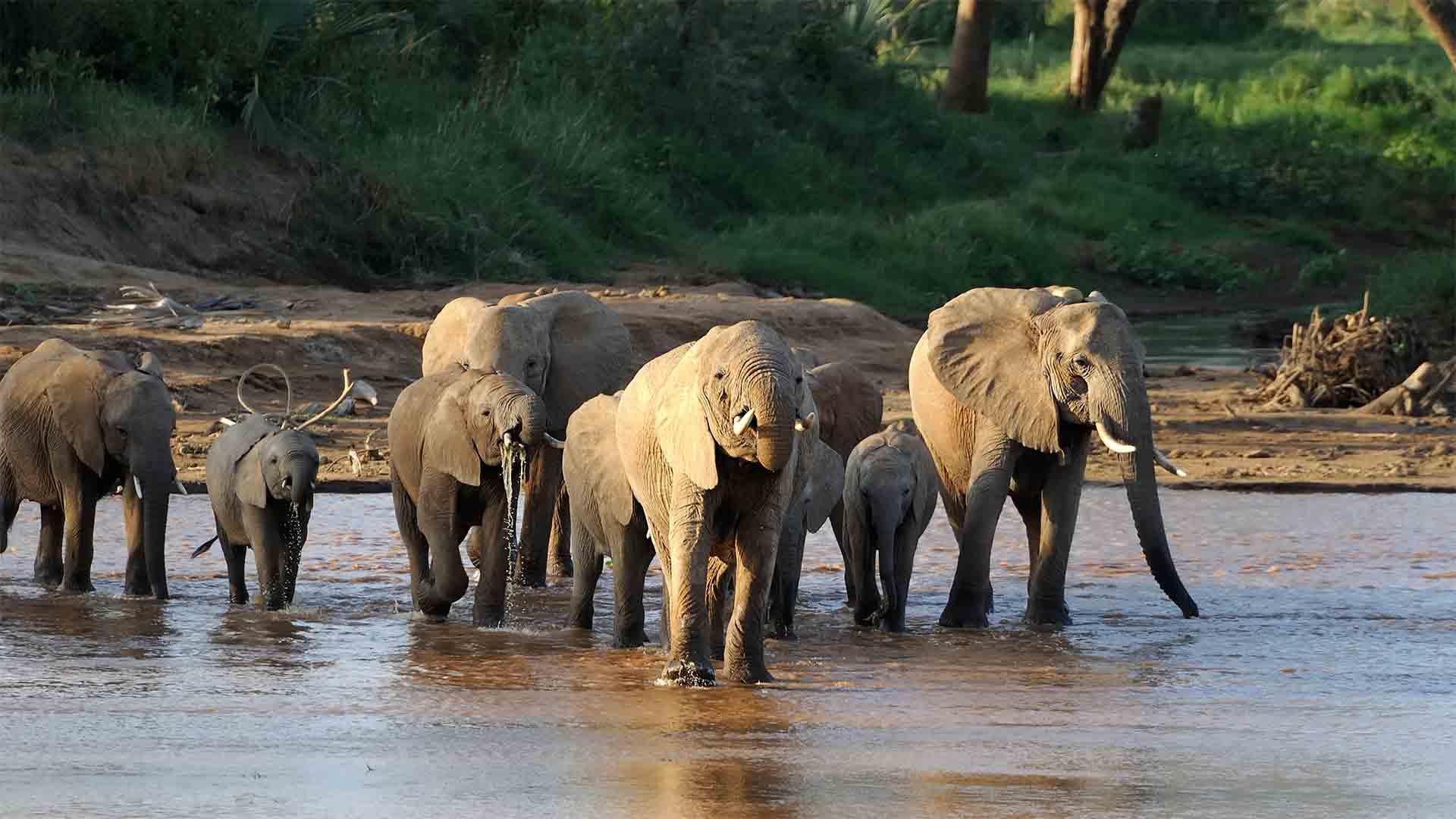 3 gode grunde til at vælge Sydafrika som din safaridestination
