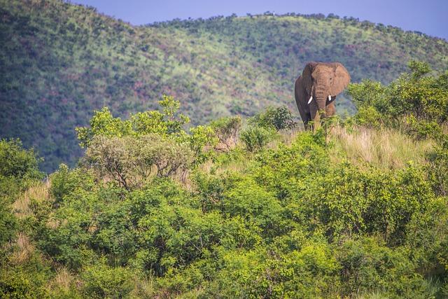 Pilanesberg Nationalpark: Opdag Sydafrikas tredjestørste nationalpark